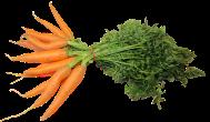 federal-carrots-1083235_640